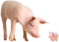 Image of a pig looking at a piggy bank.